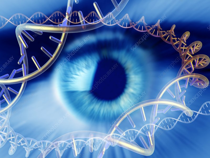 Genetics research, conceptual image