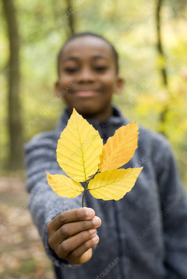 Boy holding autumn leaves