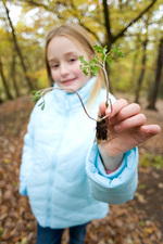 Girl holding a plant seedling