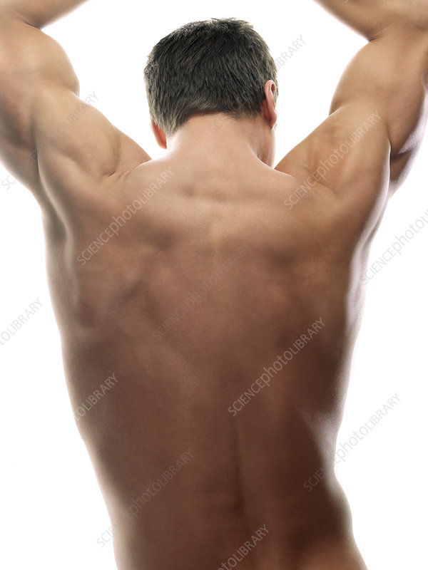 Male Back - Stock Image - F001  2165