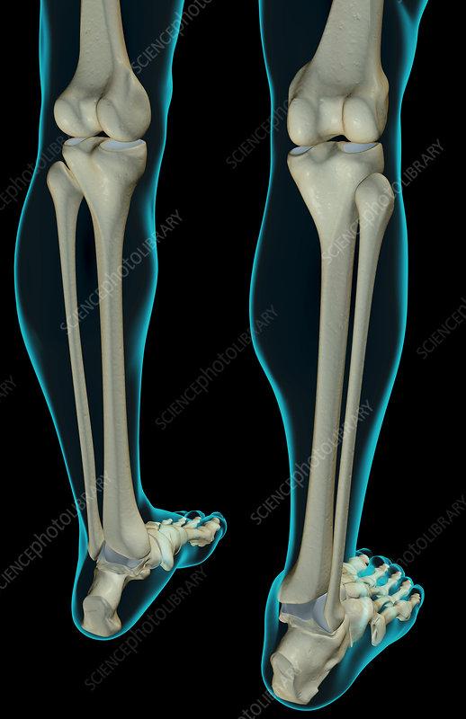Human leg side view
