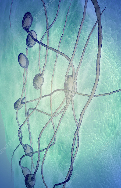 Magnification required to see sperm