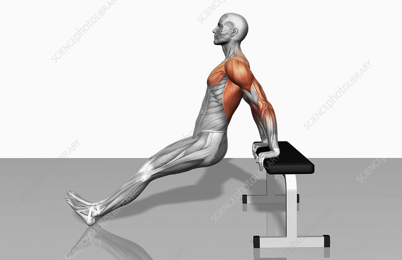 Stupendous Bench Dips Part 2 Of 2 Stock Image F002 3519 Science Pdpeps Interior Chair Design Pdpepsorg