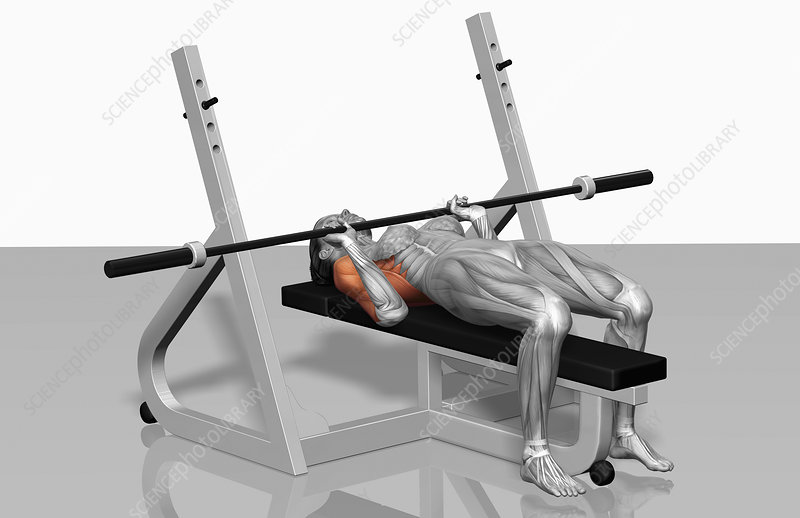 Bench press (Part 2 of 2)