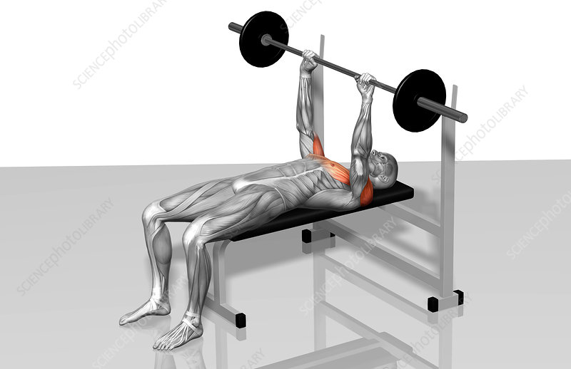 Bench press (Part 1 of 2)