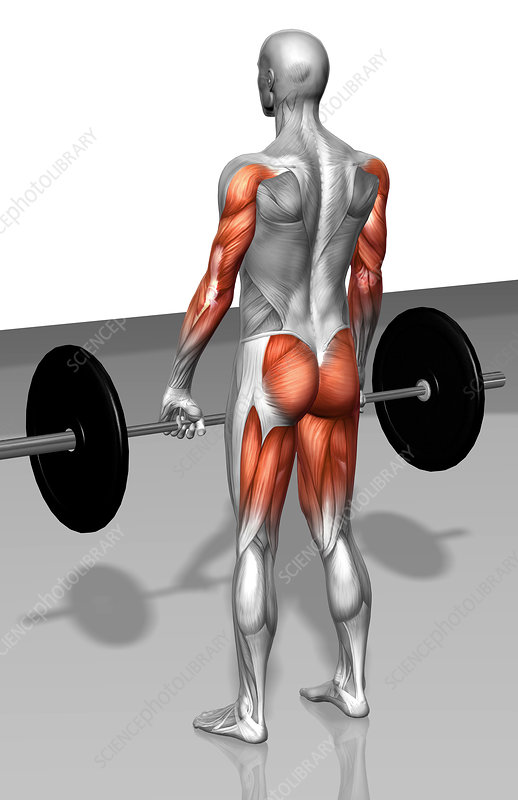 Barbell deadlift (Part 1 of 2)