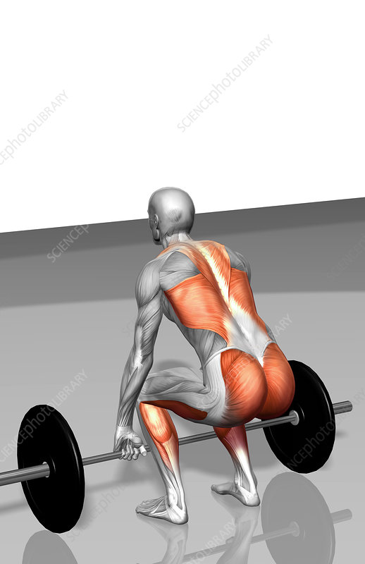 Barbell deadlift (Part 2 of 2)