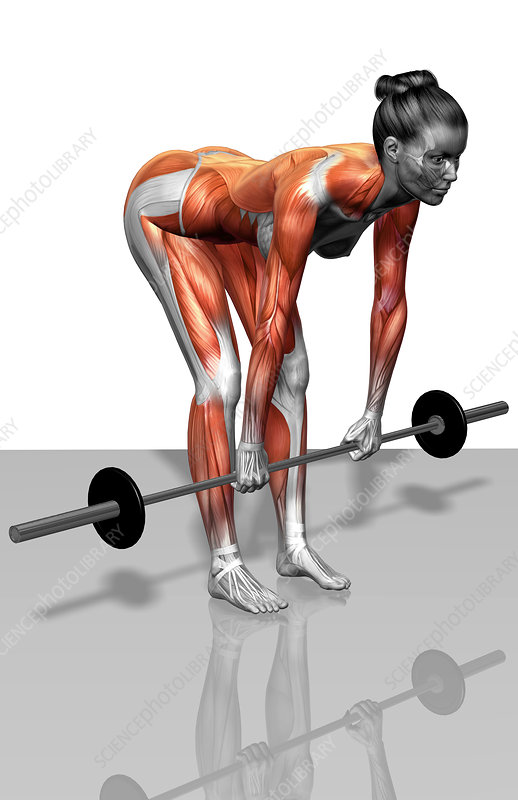 Barbell bent over row exercises (Part 2 of 2)