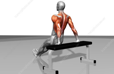 Bench dips (Part 2 of 2)