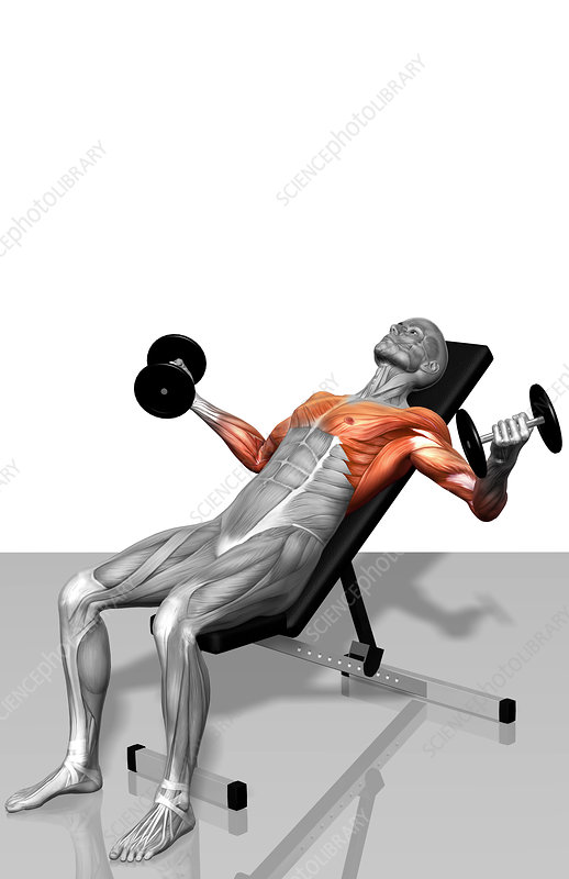 Dumbbell incline fly exercises (Part 2 of 2)