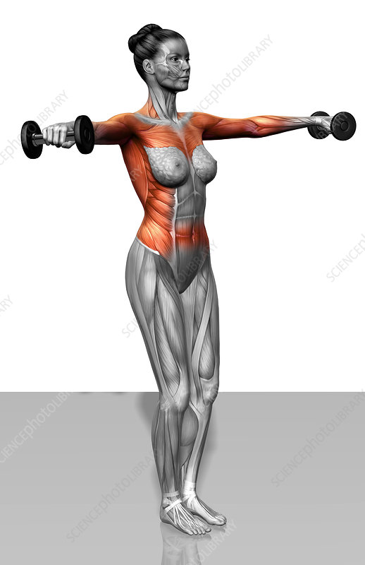 Lateral raise - Stock Image F002/4249 - Science Photo Library