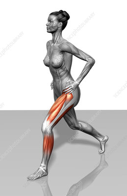 Lunge exercise (Part 2 of 2)