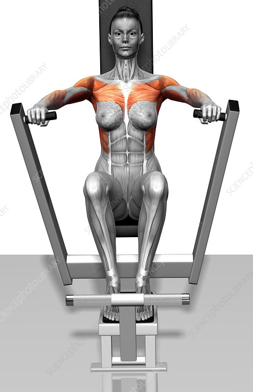 Groovy Lever Bench Press Stock Image F002 4266 Science Photo Lamtechconsult Wood Chair Design Ideas Lamtechconsultcom