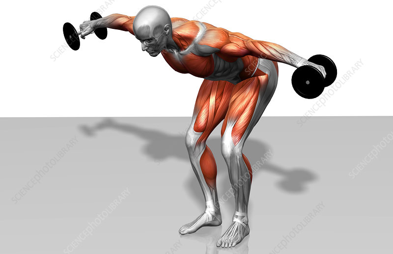 Dumbbell rear lateral raise (Part 1 of 2)