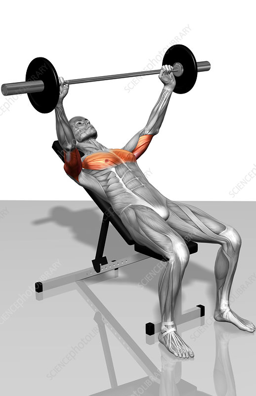 Bench press incline (Part 1 of 2)