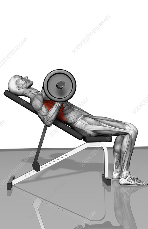 Bench press incline (Part 2 of 2)
