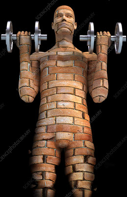 http://www.sciencephoto.com/image/200393/350wm/F0024416-Brick_man-SPL.jpg