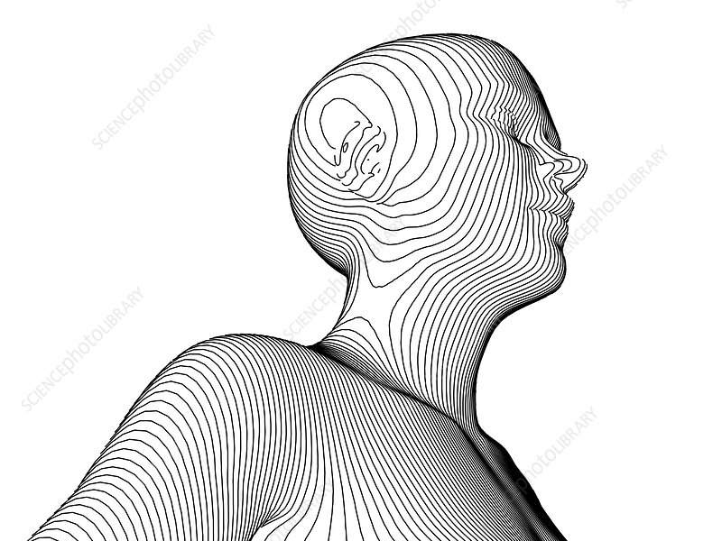 Female body contour map, artwork