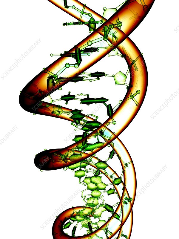 DNA molecule, conceptual artwork