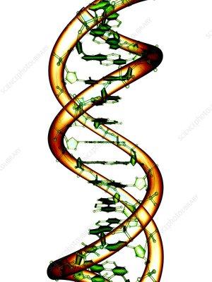 DNA molecule, conceptual artwork