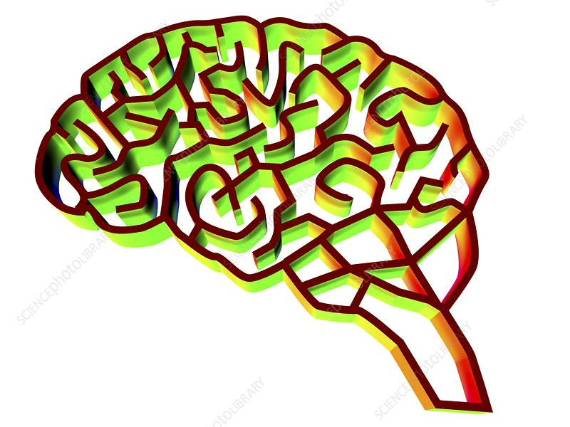 Brain complexity, conceptual artwork