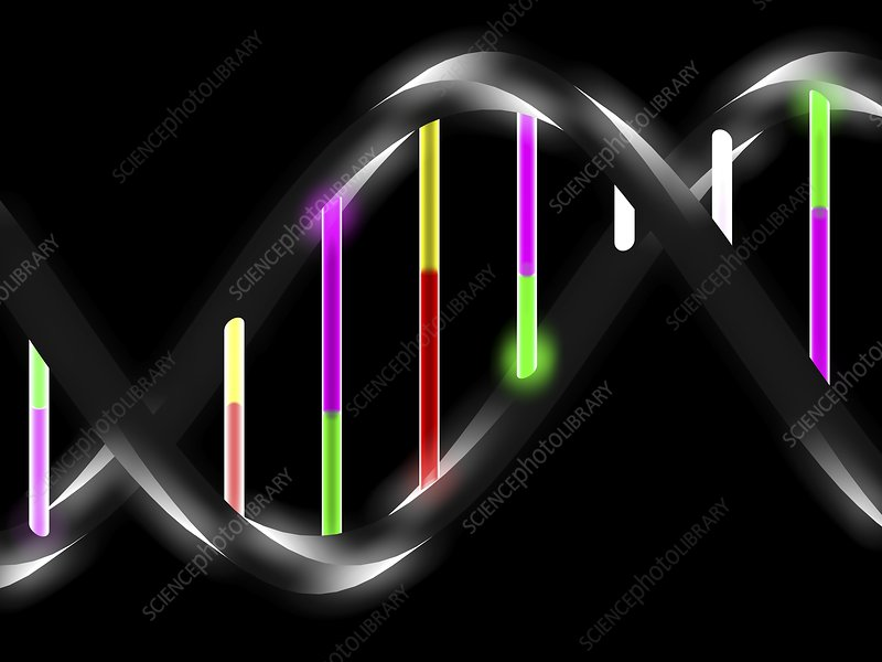 DNA molecule, artwork