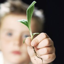 Boy holding a plant shoot
