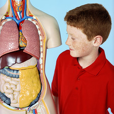 Boy with anatomy model