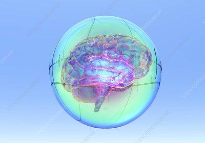 Brain in sphere,computer artwork