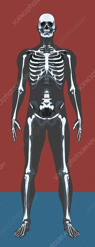 Skeleton, artwork