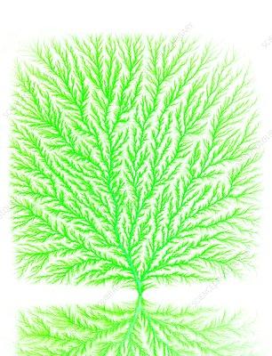Electron tree