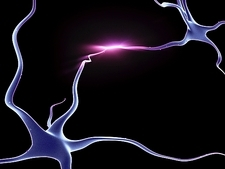 Nerve cells, neurons connected