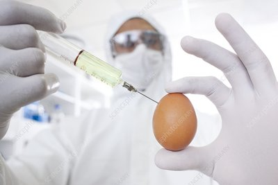 Genetically modified egg