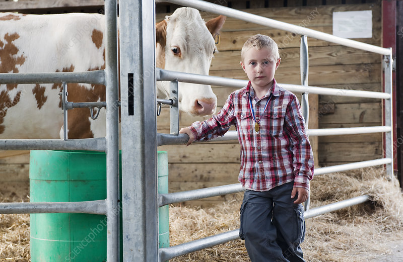 Boy with cow in barn