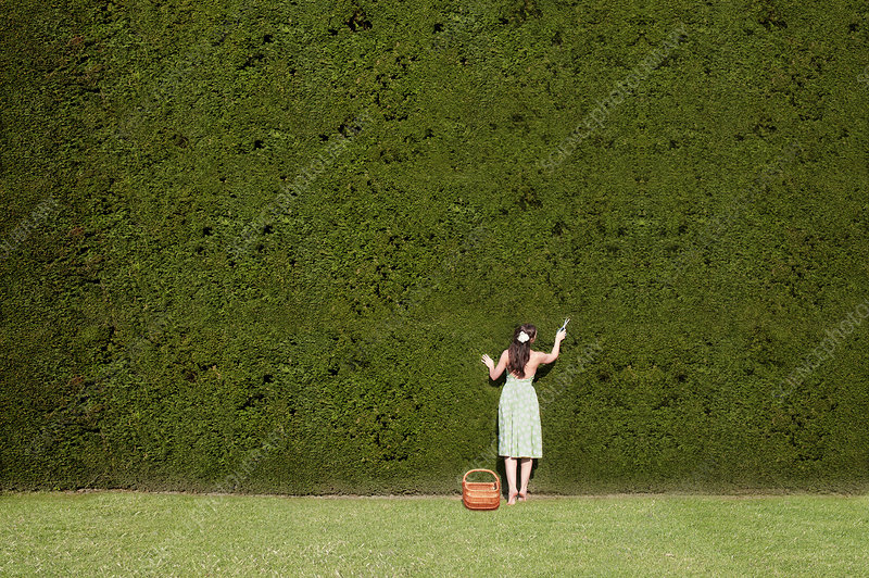 Woman Trimming Hedge in Garden