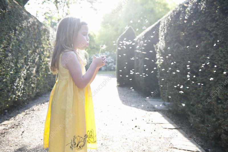 Young Girl Blowing Dandelion Seed Head