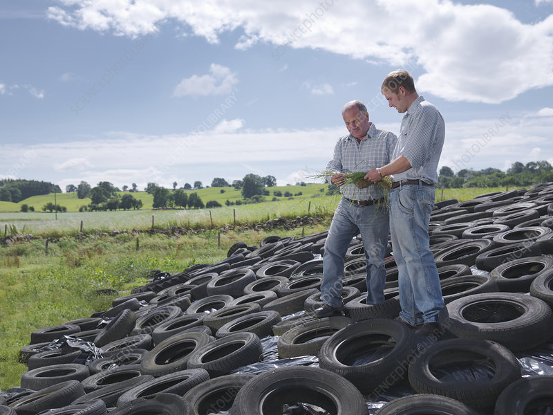 Farmers inspect grass on silage clamp