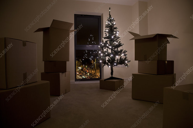 Still life of xmas tree and moving boxes