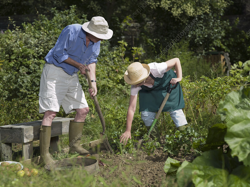 A couple digging their vegetable garden