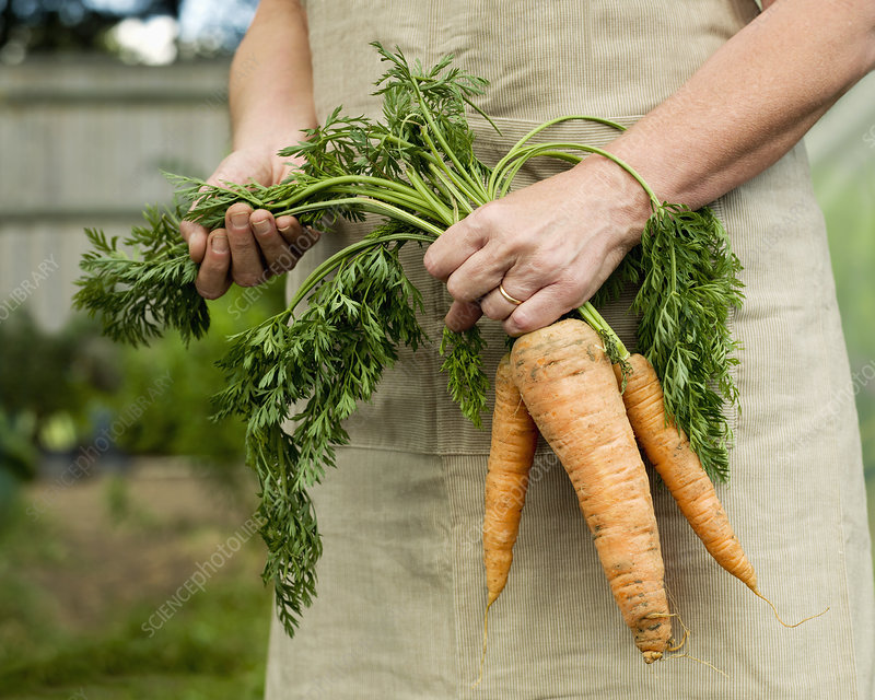 A female holding a bunch of carrots
