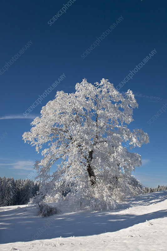 White frosted trees in winter landscape
