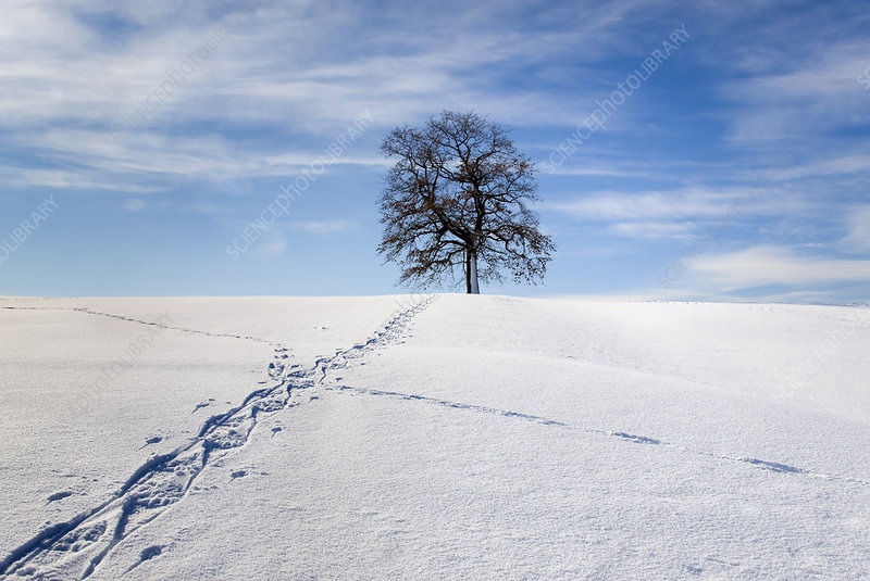 Walking track through winter landscape