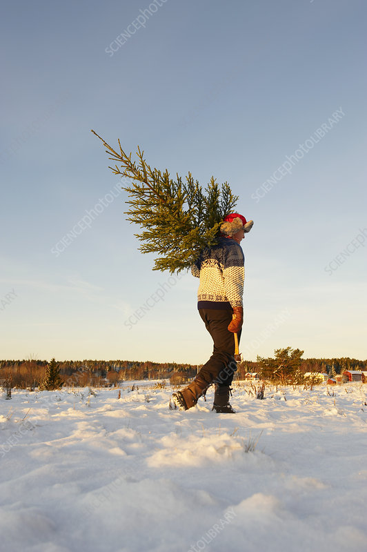 Man with Christmas tree in snow