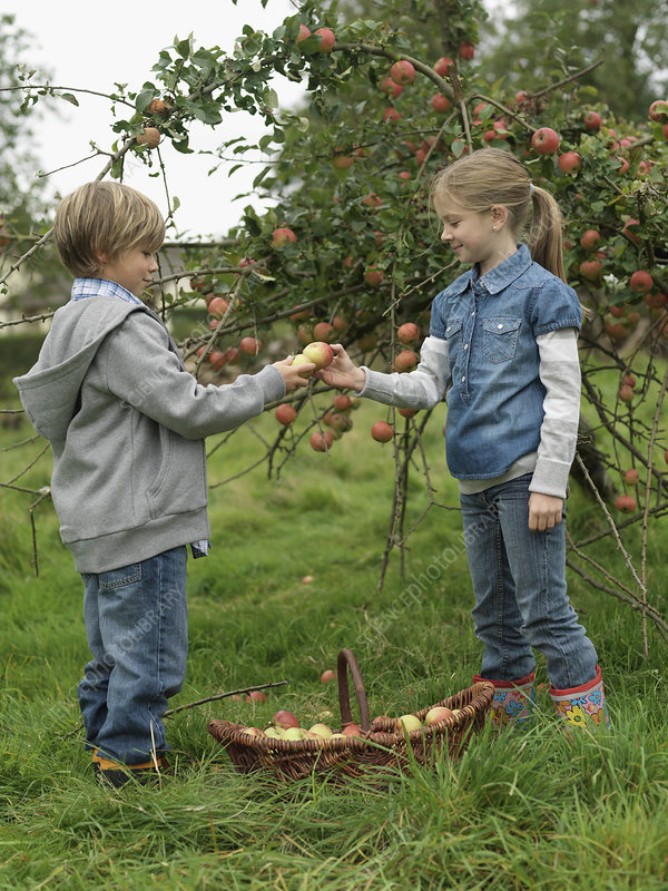 Girl and boy holding apples with basket
