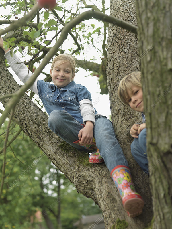 Boy and girl in tree