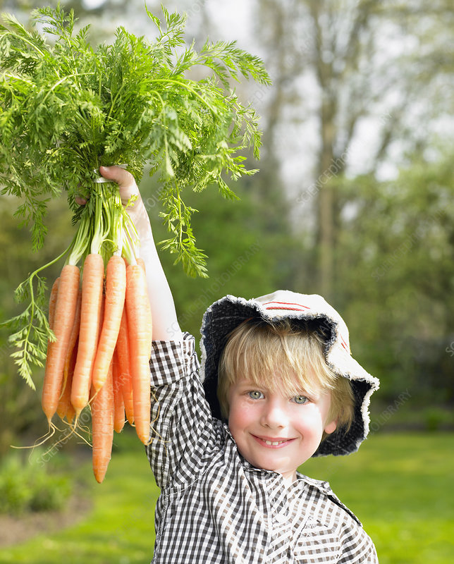 Boy holding a carrot bunch