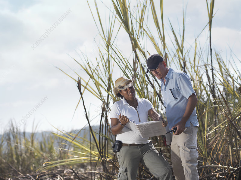 Woman & Man With Clipboard In Sugar Cane