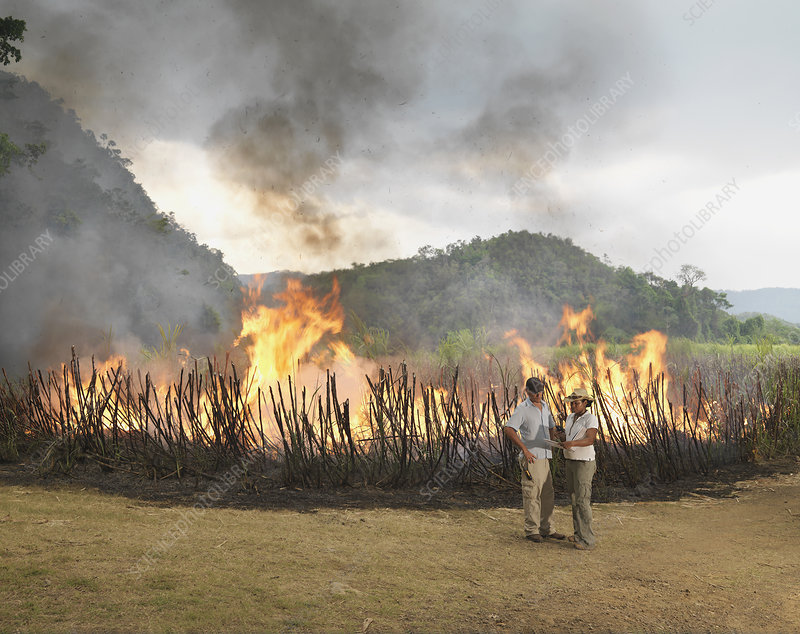 Workers In Front Of Burning Sugar Cane