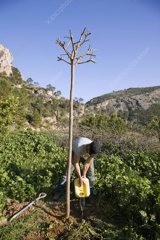Tree planting on organic farm in Spain