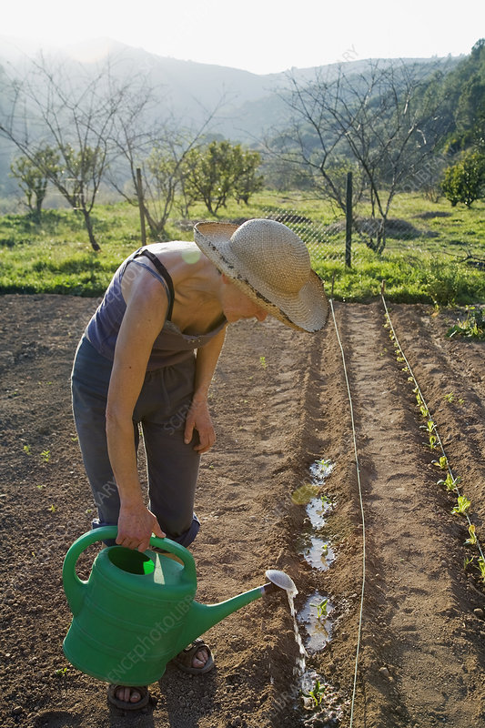 Plant watering on organic farm in Spain